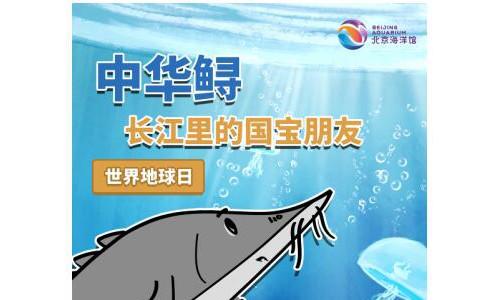 守护国宝中华鲟 北京海洋馆在行动