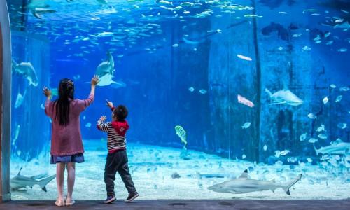 北京海洋馆打造六一儿童节海洋奇妙之旅,妙趣童心相约海洋梦